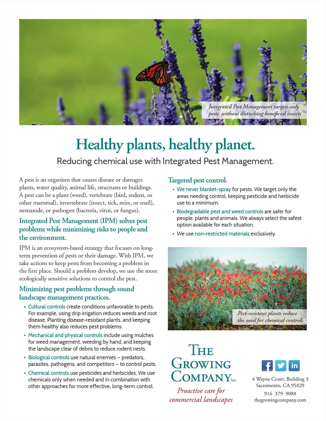 Growing Company Healthy Plant Flyer